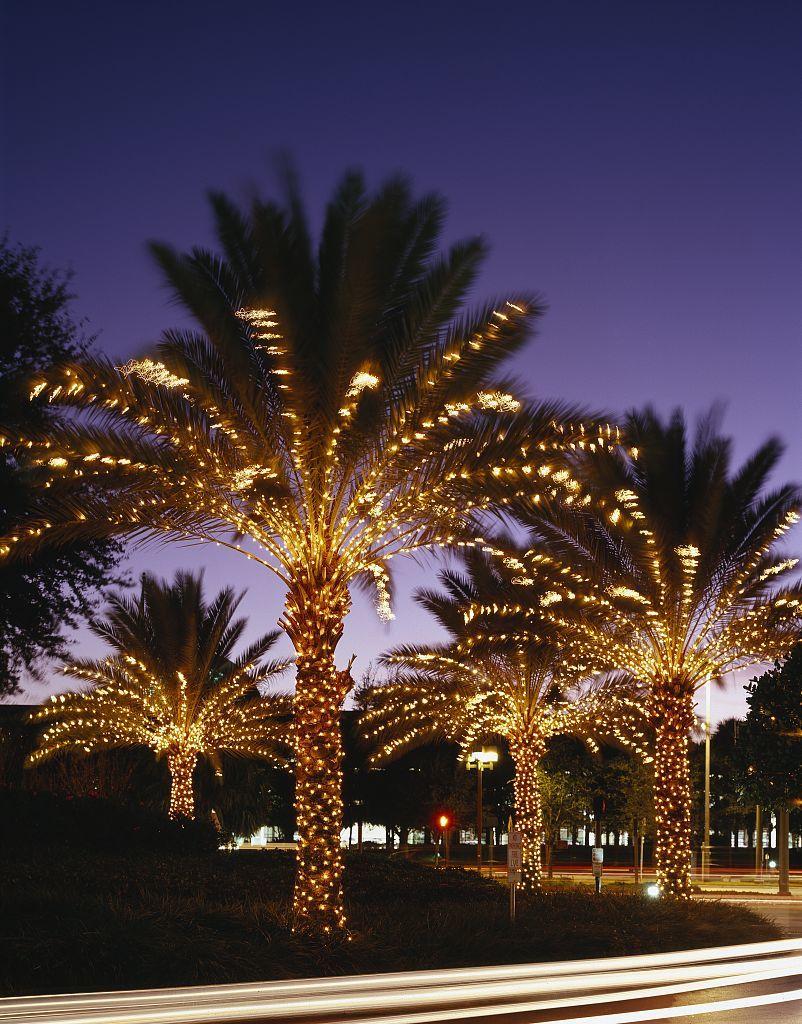 christmas-palm-tree